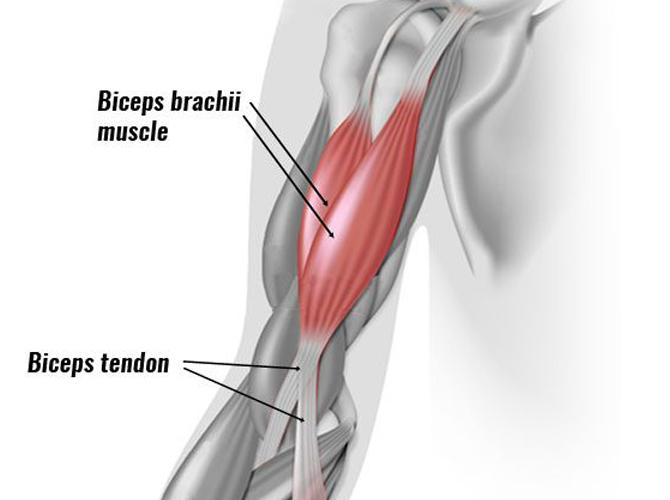 FitnessWithDavid--Biscepts-Muscles