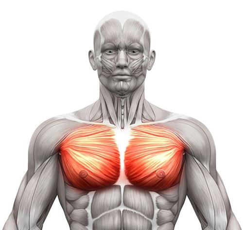 FitnessWithDavid--Chest-Muscles
