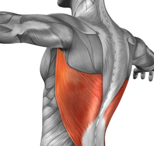 FitnessWithDavid--Lat-Muscles