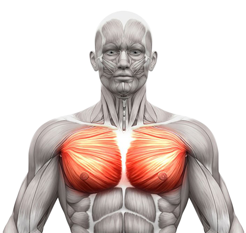 FitnessWithDavid--Chest-Muscles